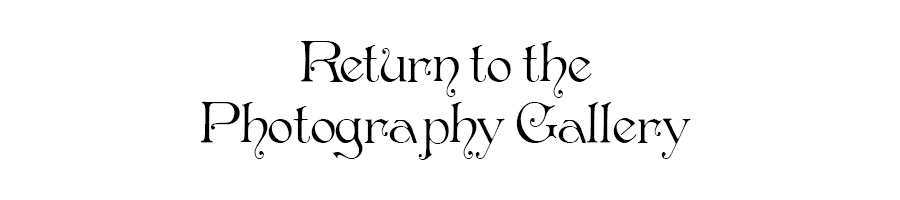 Return to Photography Gallery